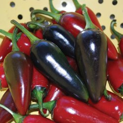 Hot Pepper - Hungarian Black