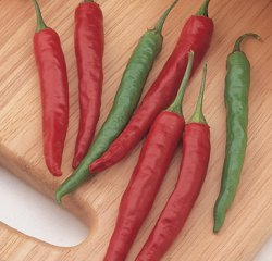 Hot Pepper - Chiang Rai