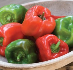 Sweet Pepper - Crispy Hybrid