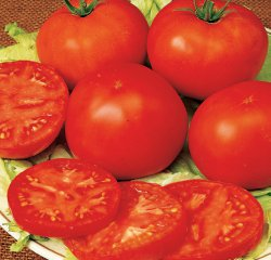 Tomato - Early Pick VF Hybrid