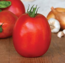 Tomato - SuperSauce Hybrid